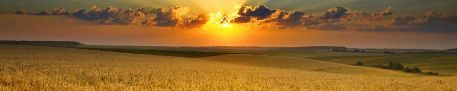Bethlehem Harvest
